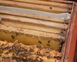 Menu: Besuch bei den Bienen