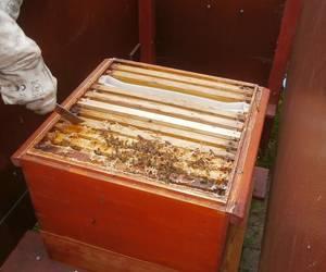 Der Imker zeigt das Innere eines Bienenstocks